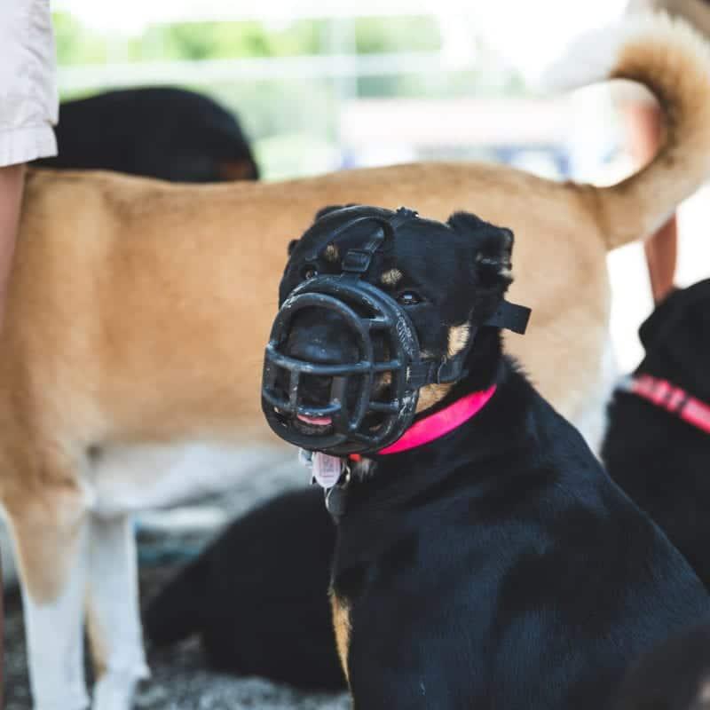 Dog wearing a muzzle